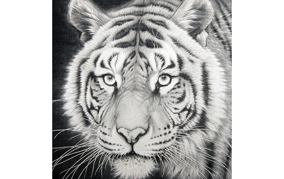 Laser Engraved Photo of a Tiger