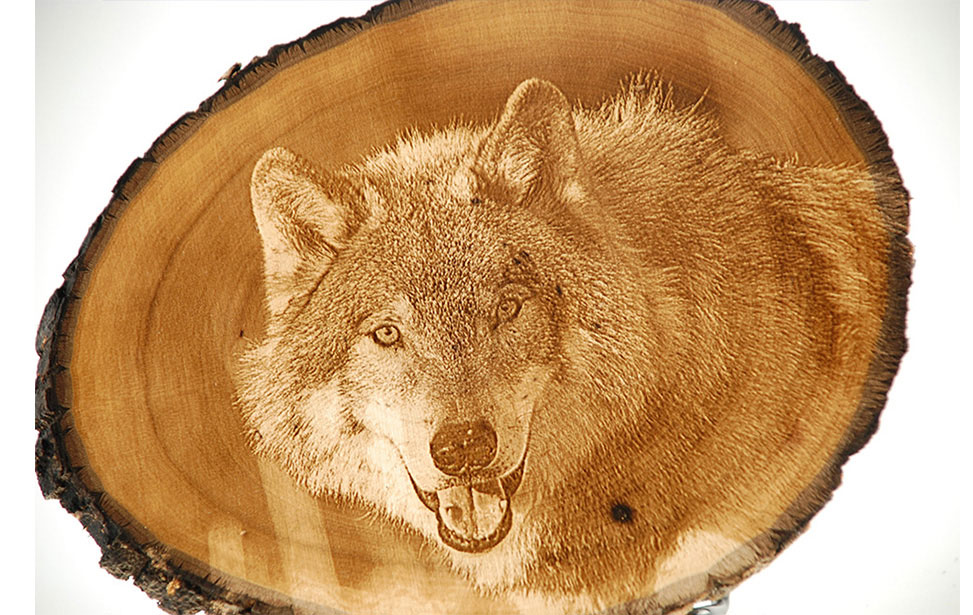 Photo Engraving of Wolf on Wood Slice