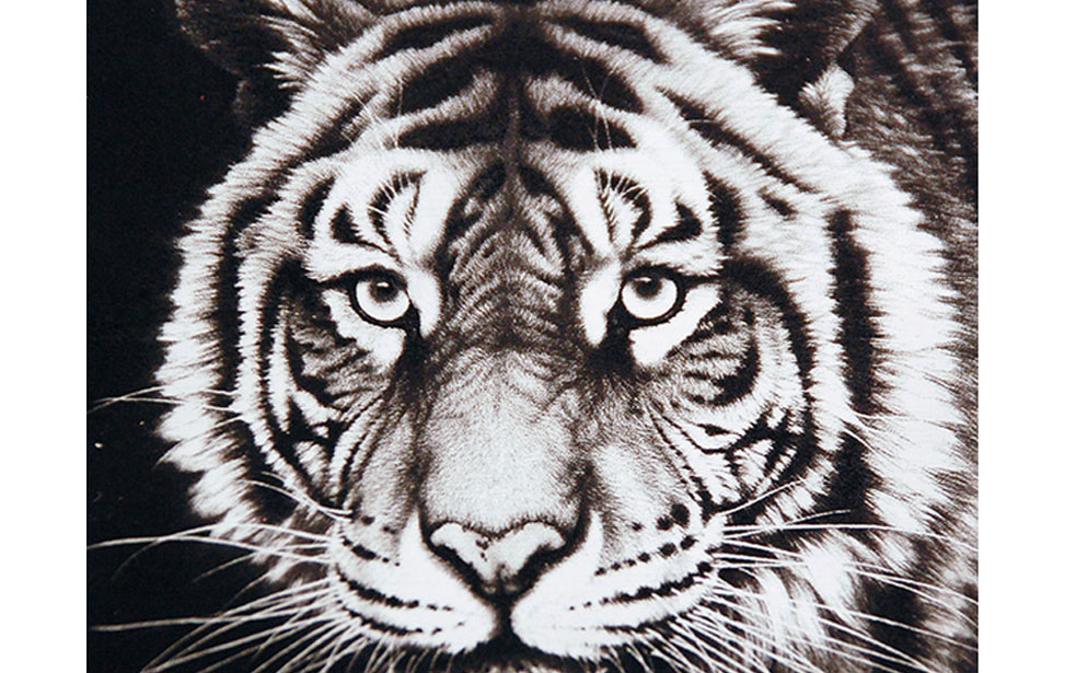 Black laminate plastic laser engraved with tiger photo